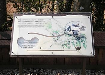 横浜動物の森公園ズーラシア アビシニアコロブス舎他新築工事
